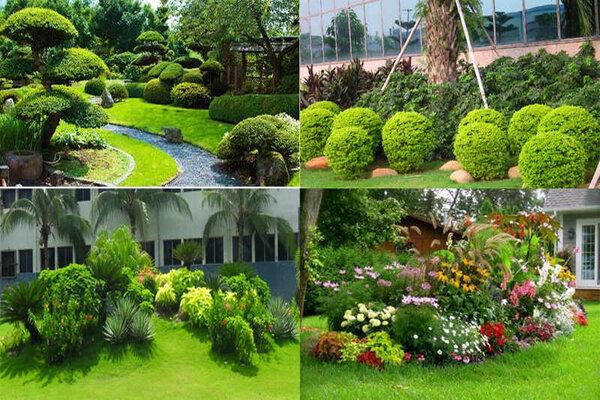 chăm sóc cây cảnh tại Hà Nội