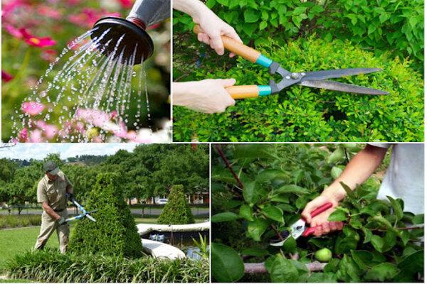 chăm sóc cây xanh tại Hà Nội