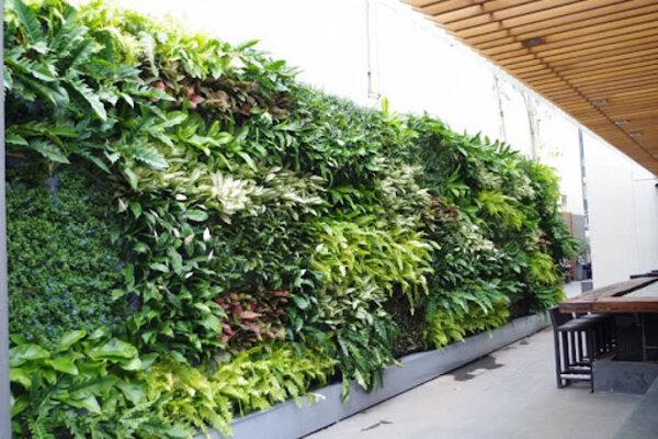 thi công tường cây xanh