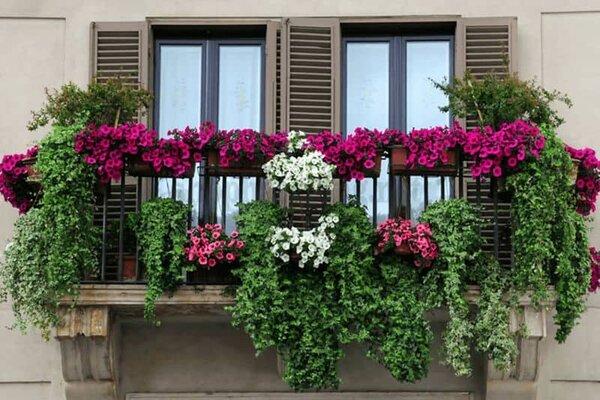 tường cây xanh kết hợp với hoa