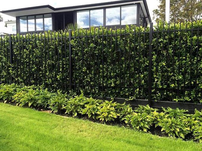 tường cây xanh làm hàng rào